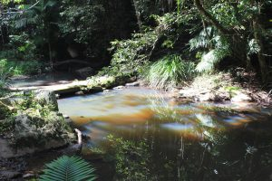 Kuranda Creek - bald Zuhause in Townsville