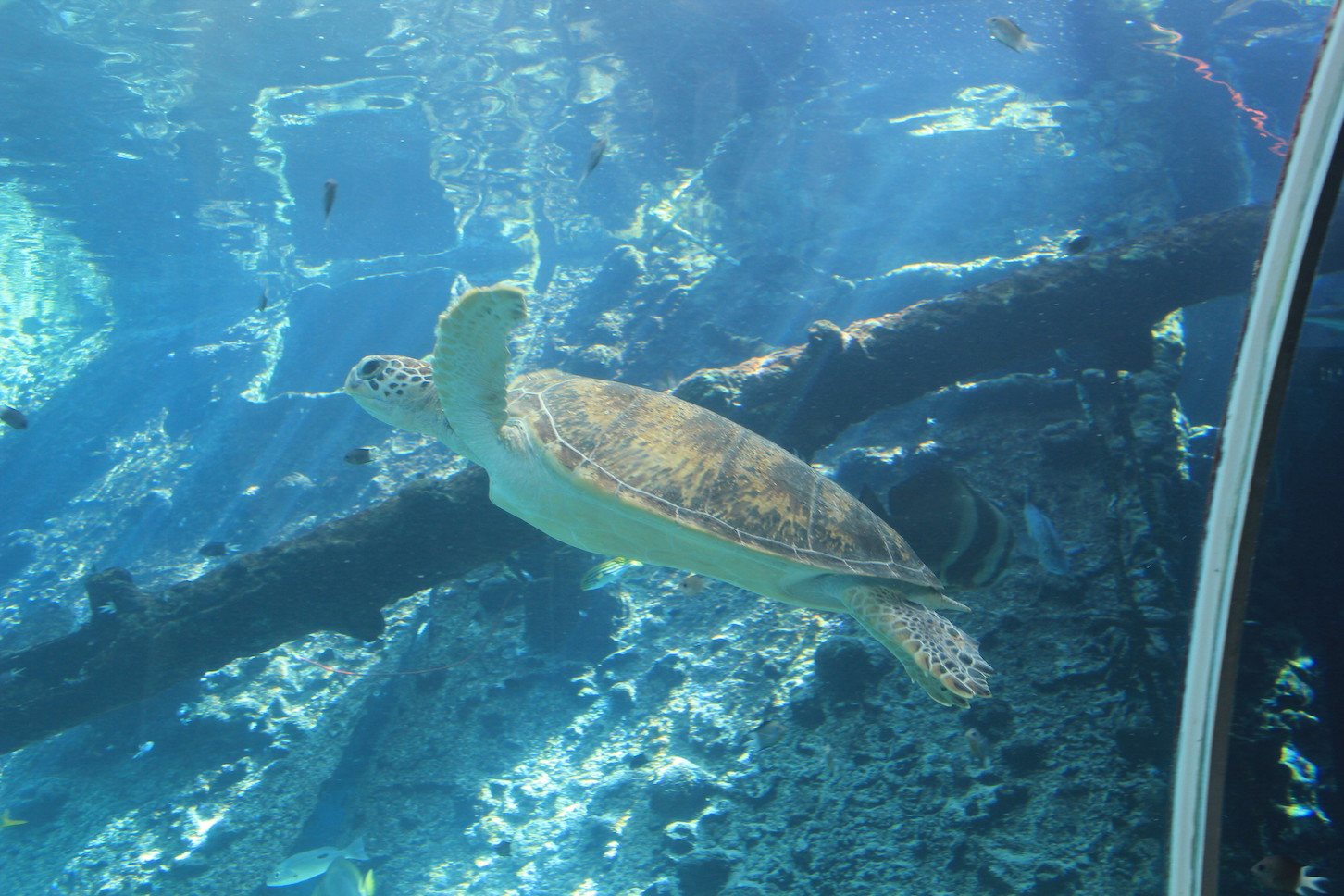 Townsvilles Highlights Sea Turtle