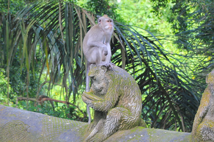 Auf in den Monkey Forest