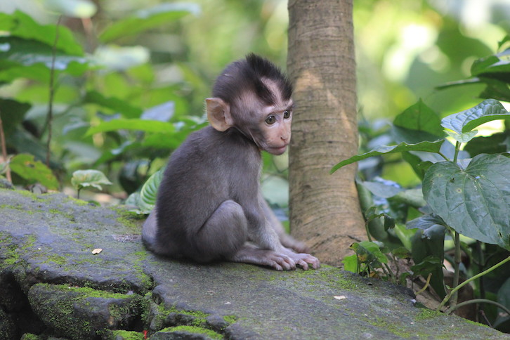 Cuteness im Monkey Forest
