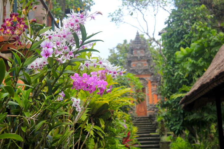 Orchideen in Ubud
